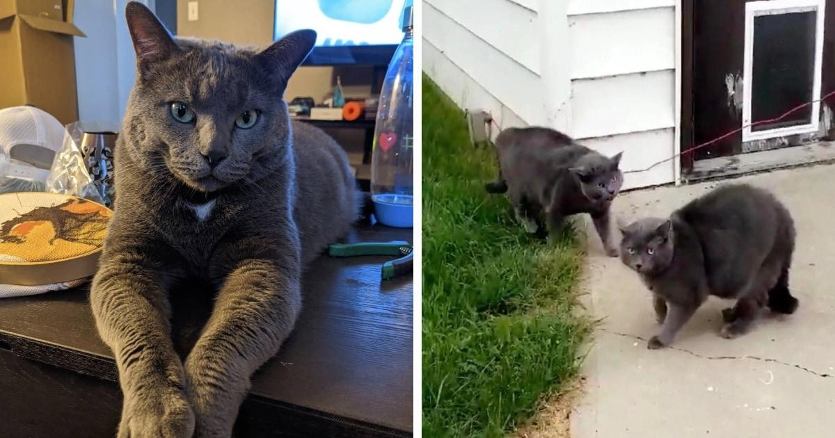 Хозяйка выпустила кота во двор, а когда вернулась, их было уже двое. И понять, кто есть кто, не могла даже она