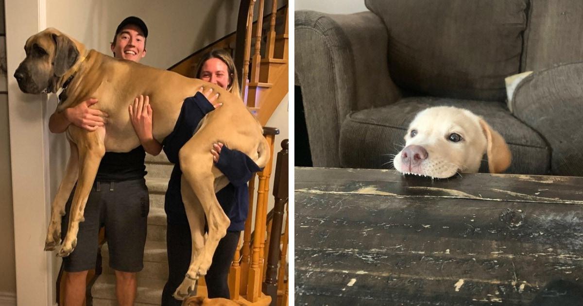 17 фотографий собак, для просмотра которых не нужно специально искать отдельную причину
