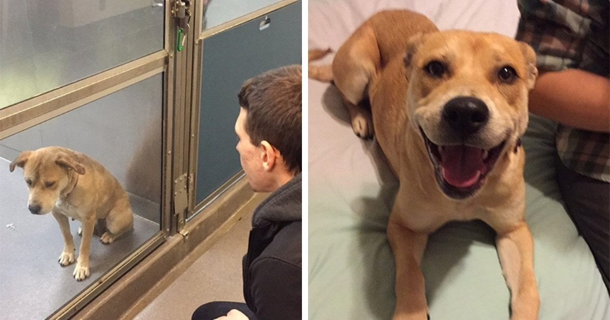 18 фото кошек и собак, которые обрели хозяина и стали во много раз счастливее