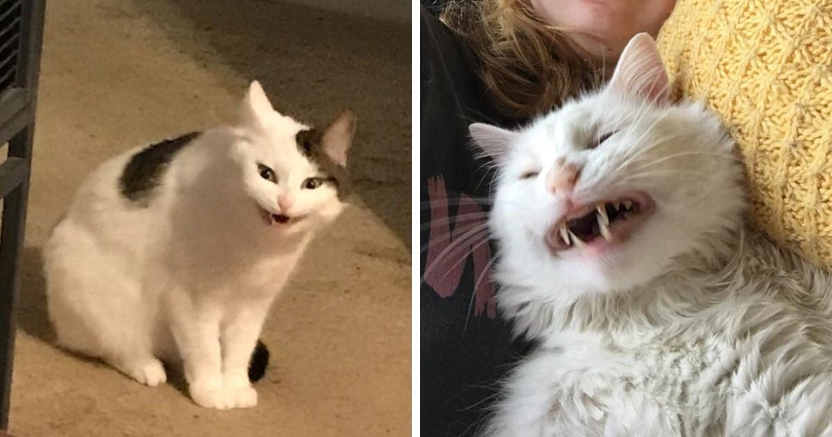 17 неловких фотографий, когда людям удалось поймать своих котов во время чихания. Они словно созданы для мемов