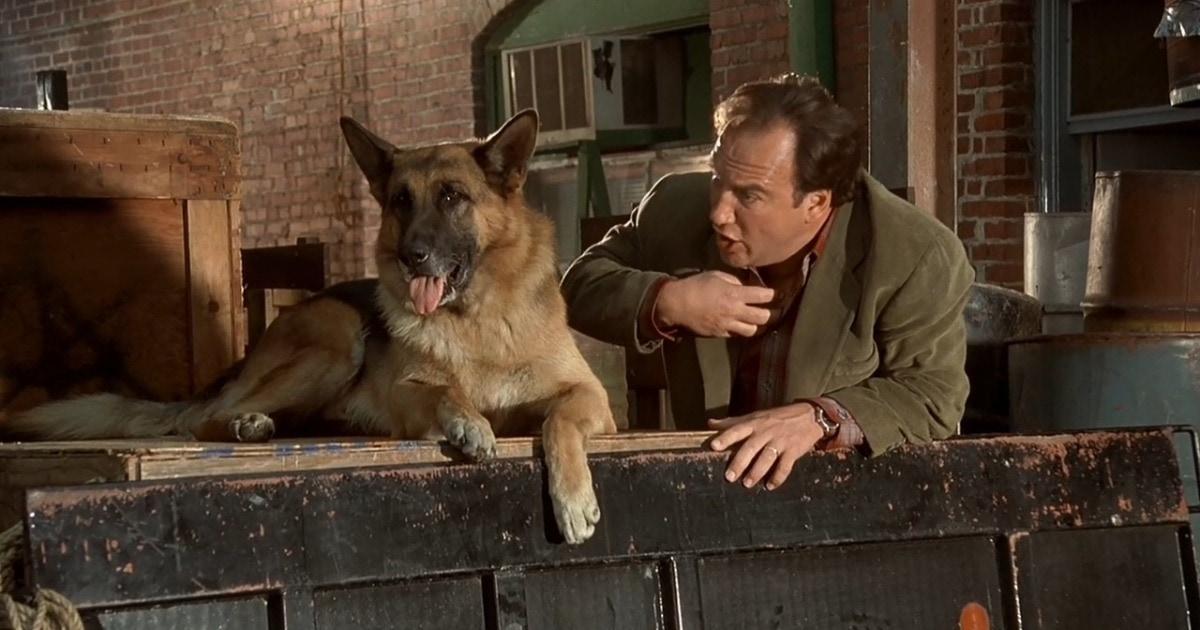 10 лучших фильмов про собак: трогательные истории дружбы, верности и любви