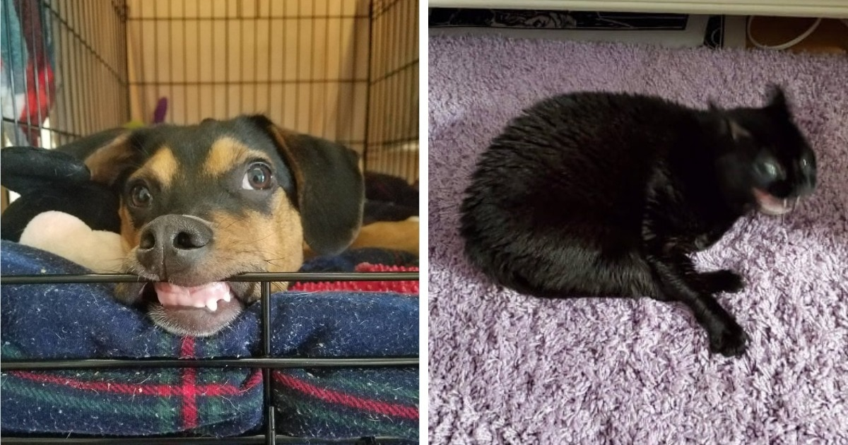 Пользователи сети делятся самыми неудачными снимками своих животных, которые выглядят трешово, но смешно