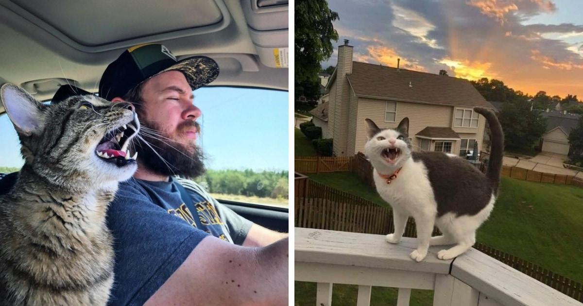 16 фотографий громких котиков, чьё мощное «мяу» слышно, кажется, даже через монитор