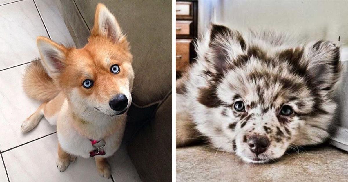18 удивительных собак-метисов, в которых смешался коктейль из внешностей родителей разных пород
