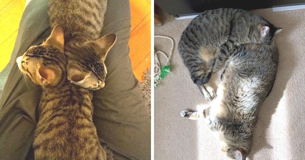 17 крайне милых случаев, когда коты спали вместе, образовывая новые причудливые фигуры