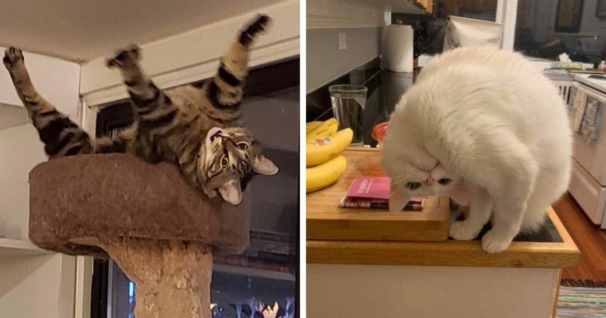 18 безумно забавных случаев, когда коты будто бы сломались и вели себя странно, но смешно