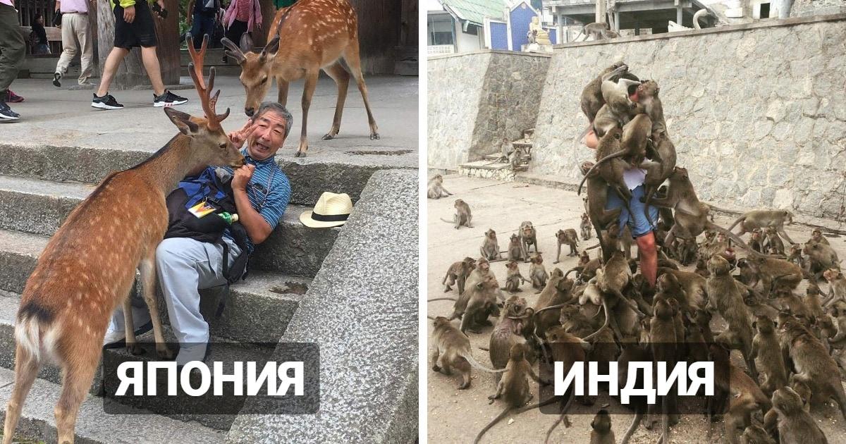10 фотографий, которые демонстрируют, что в разных странах мира живут свои «голуби»