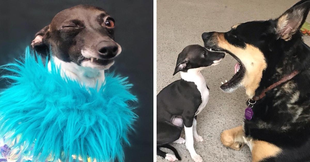 Собака покорила хозяйку и подписчиков своими эмоциями. Ведь её Инстаграм — настоящий парад дурашливости