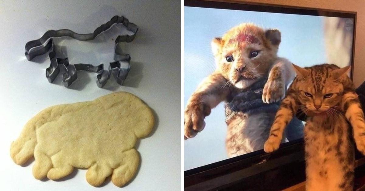 16 забавных фотографий, глядя на которые хочется произнести: «Ну, почти»