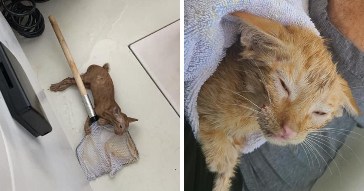 Семья отправилась на рыбалку в пролив, но вместо рыбы им попался неожиданный улов — кот