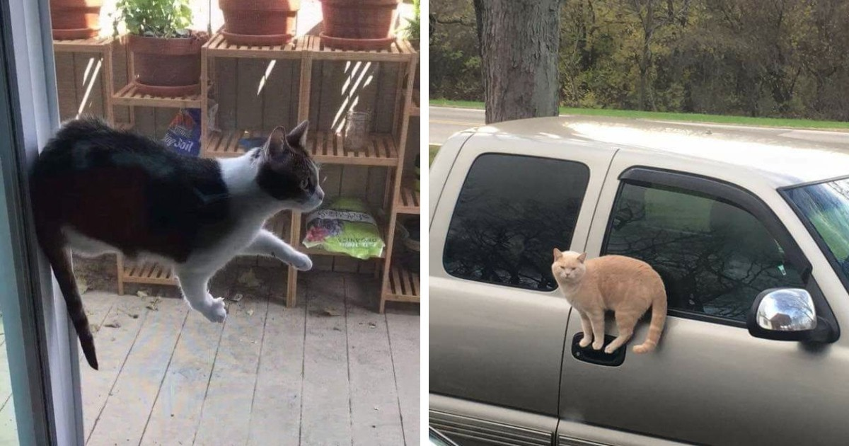 16 фотографий, которые доказывают, что законам физики подчиняются все, кроме котов