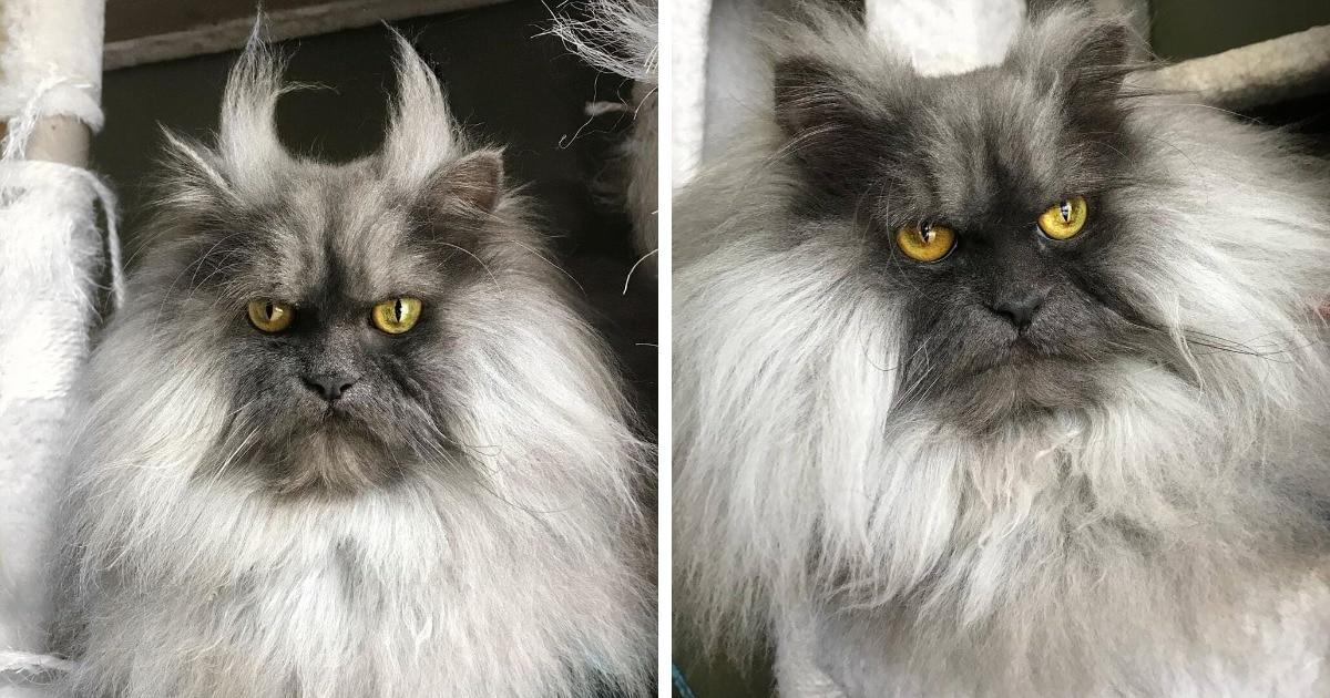 20 фото кота Джуно, который шокирует своей шевелюрой и «осуждает всё вокруг с 2012 года»