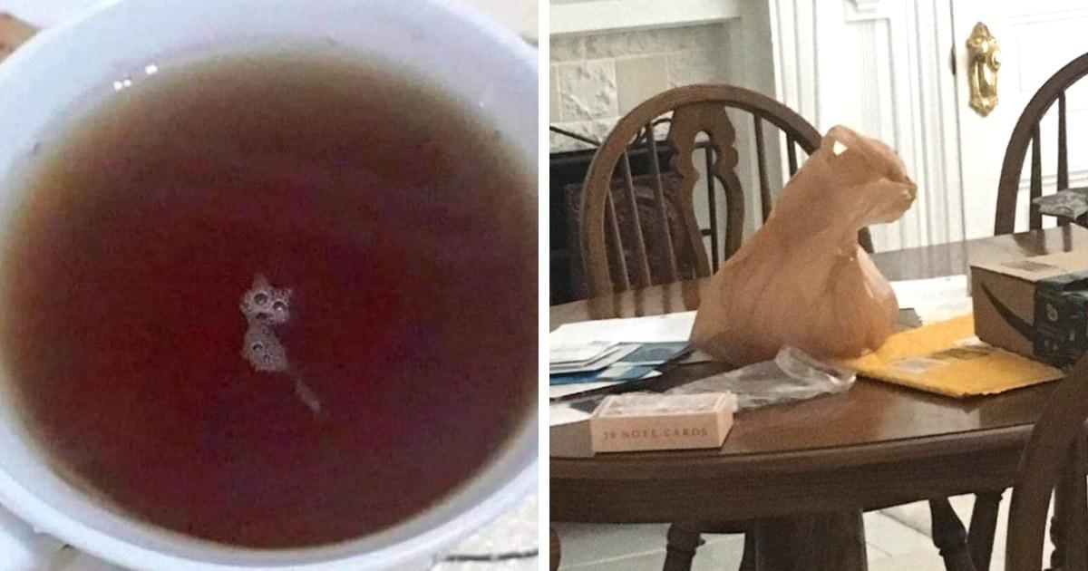 17 хитрых снимков, которые заставят вас поверить в то, что на них присутствуют коты (хоть их там и нет)