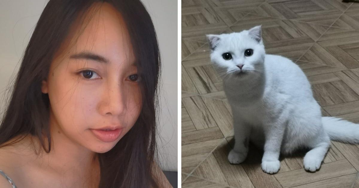 Хозяйка превратила кошку в покемона, пока лечила её народным средством. Ведь куркума + белая шерсть = провал