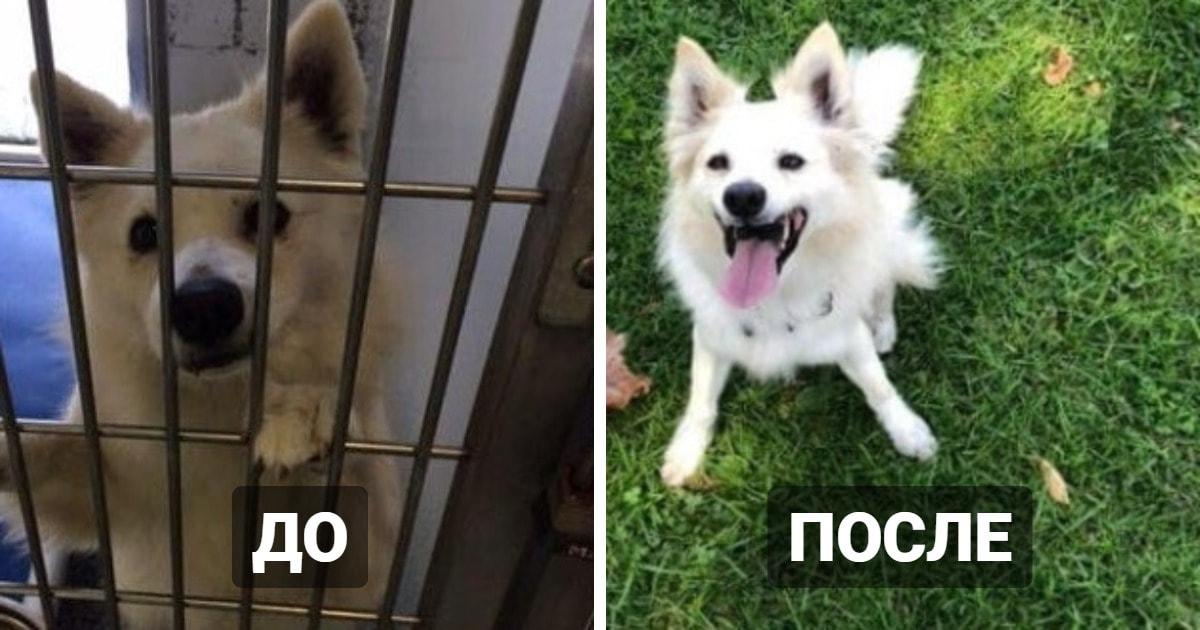 18 фотографий собак, которые обрели новый дом и стали гораздо счастливее, чем были прежде