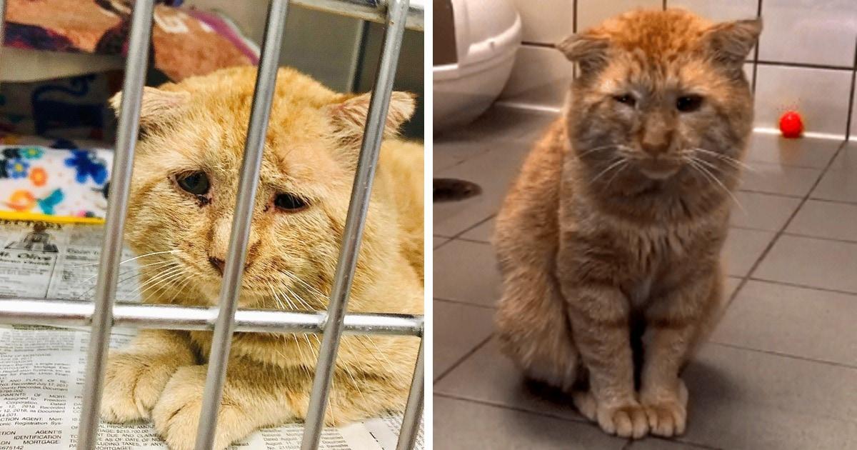 Год назад девушка забрала из приюта самого грустного кота. Зато теперь его довольную морду просто не узнать!