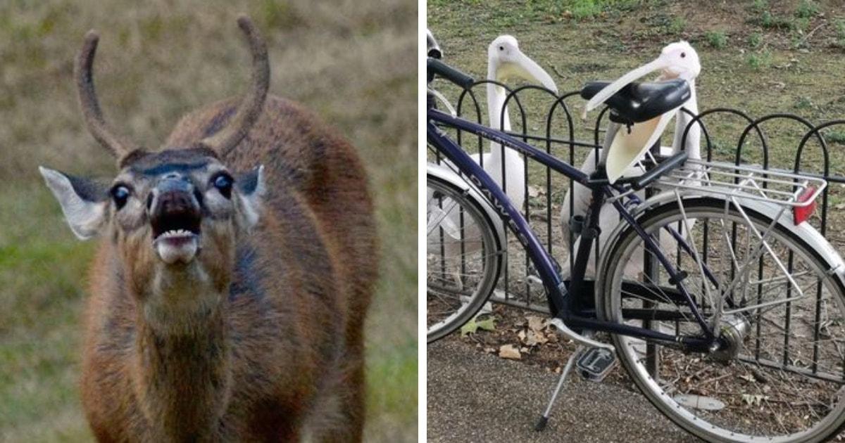 17 забавных случаев, когда людям удалось сфотографировать животных в самый неловкий момент