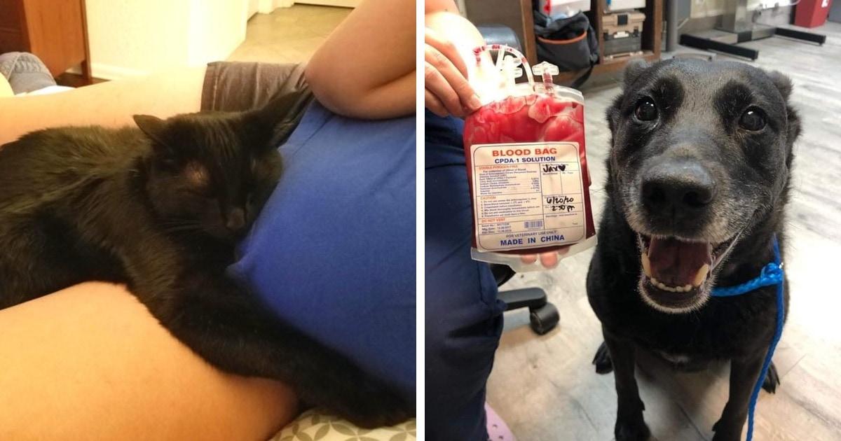 15 фотографий кошек и собак, чьи хозяева очень гордятся преданностью, добротой и заботой своих питомцев