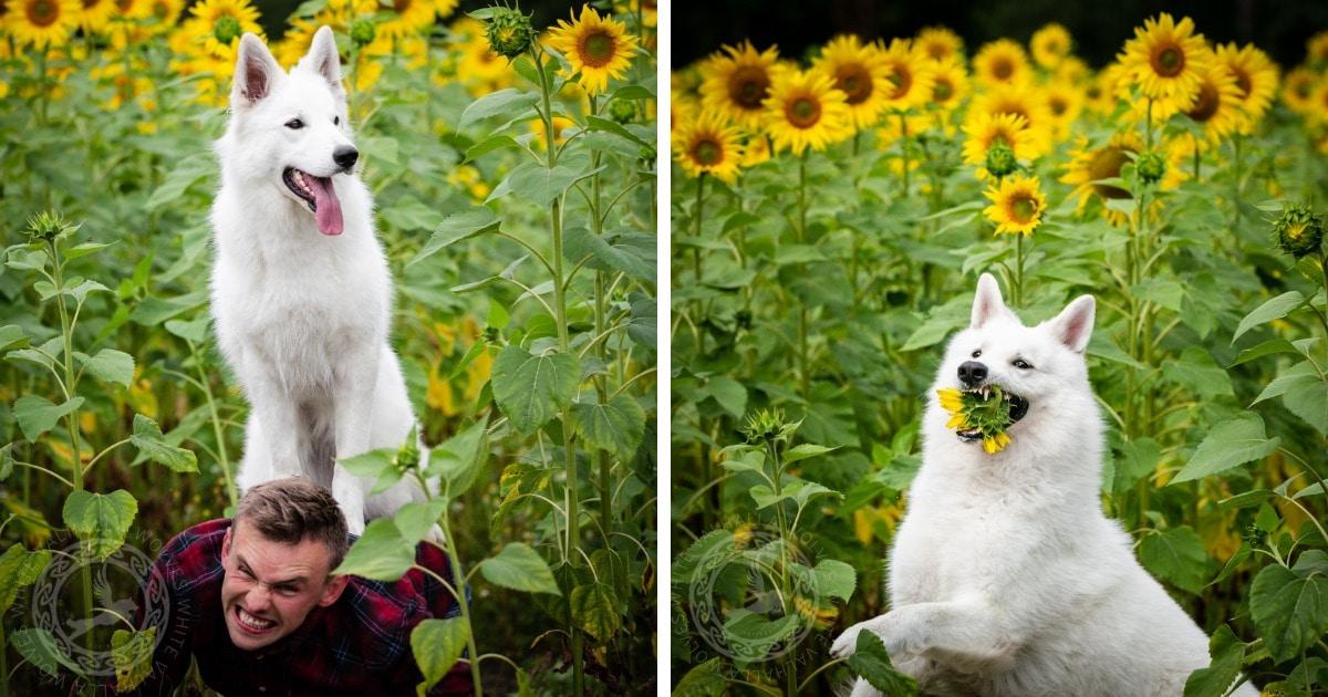 Хозяйка устроила съёмки для трёх собак, но всё пошло не по плану. Ведь собаки + цветы = безудержное веселье