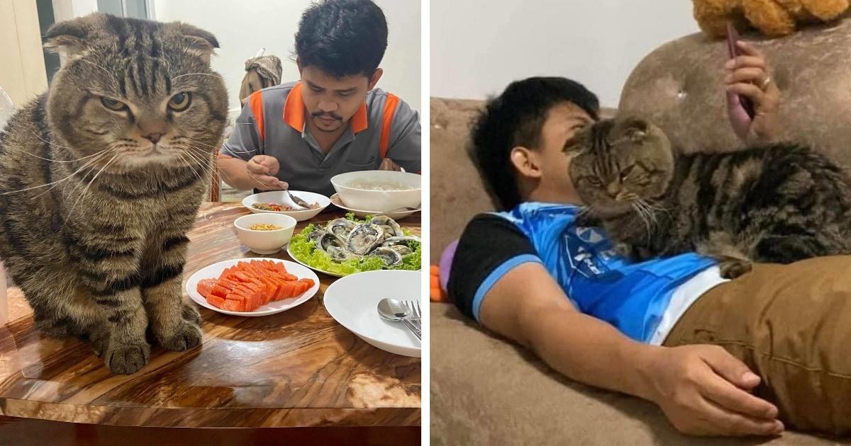 «Это украло моего мужа»: жительница Таиланда фиксирует на фото необычайную связь её супруга и ревнивого кота