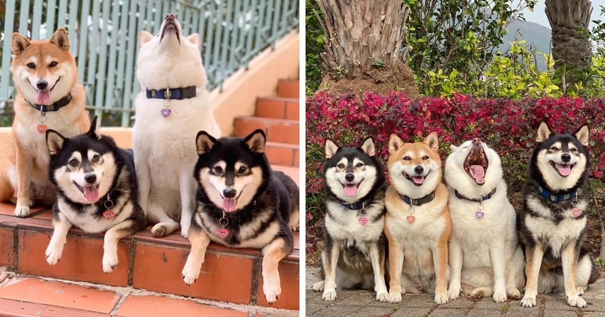 Хозяйка 4 собак делится снимками своих питомиц, одна из которых всегда портит фото. И такой друг есть у всех
