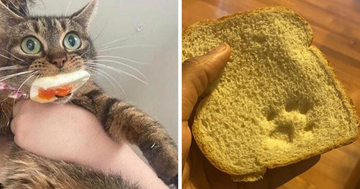19 случаев, когда коты установили свои правила в доме и показали, кто там на самом деле хозяин