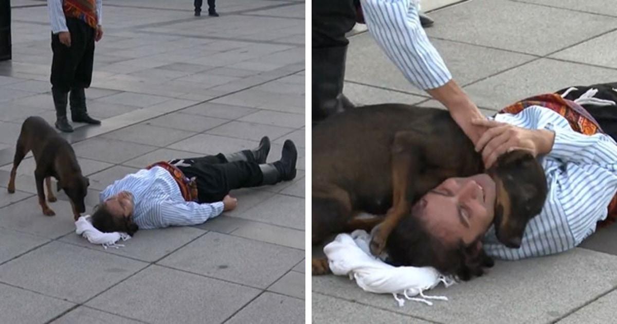 Уличный пёс прервал выступление актёра, решив, что ему и правда стало плохо. Но это только улучшило перформанс
