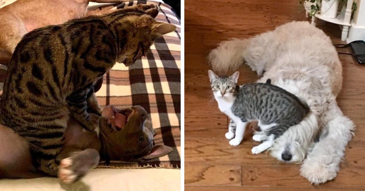 18 случаев, когда нахальные коты бесцеремонно приструнили собак и одержали над ними безоговорочную победу
