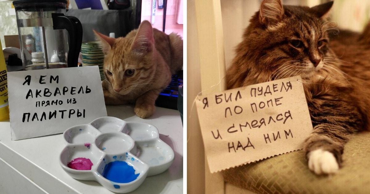 18 котиков, которых поймали с поличным и пристыдили, но они нисколько не сожалеют о своих преступлениях