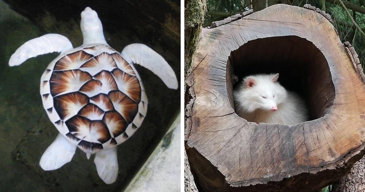15 животных с потерей пигментации, которых природа решила оставить белыми, но от этого ещё более прекрасными