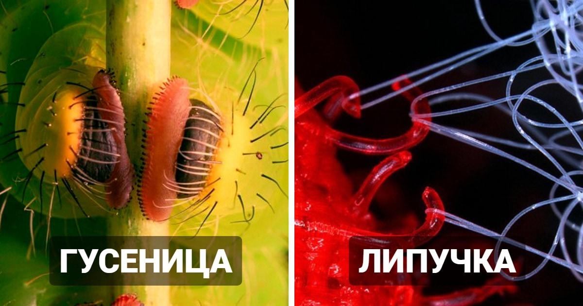 16 удивительных макрофотографий, которые позволяют очень близко рассмотреть окружающие вещи