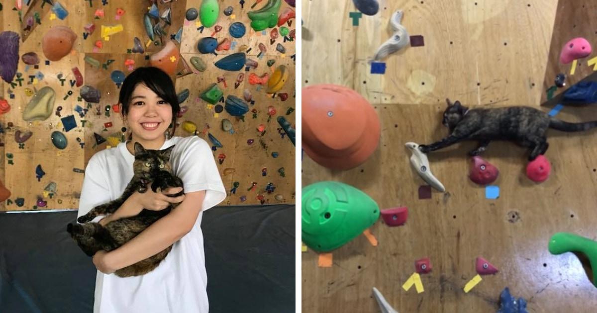 Кошка Лала живёт в зале для скалолазания и занимается им каждый день. И видео с её тренировки покорило сеть