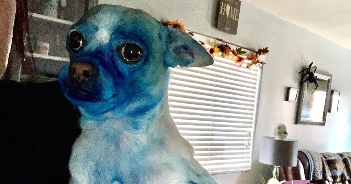 Незадачливый пёс испачкался в синей краске, и фотошоперы взялись за дело. И он отлично смотрится на картинах!