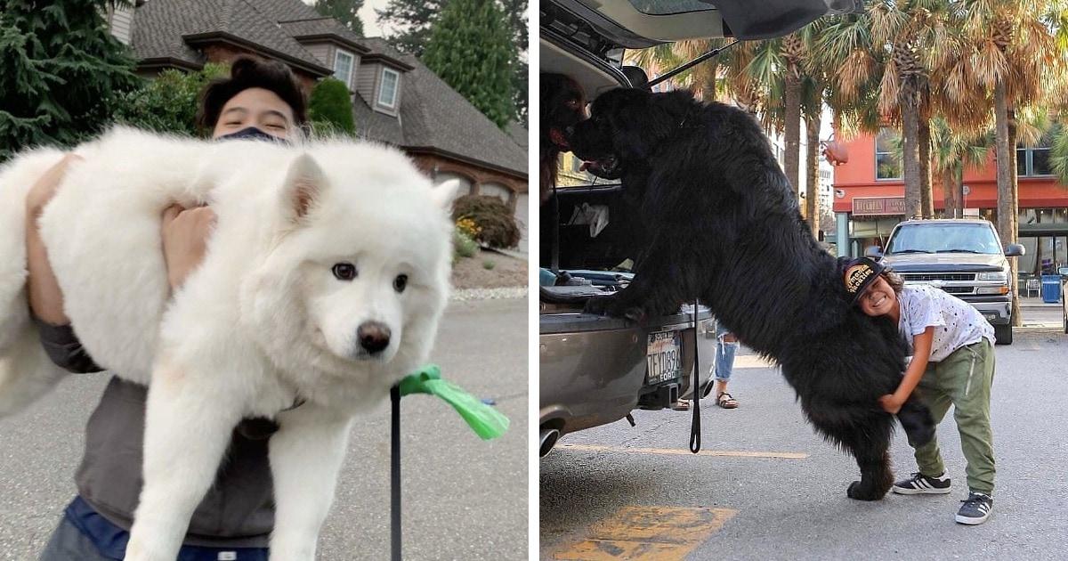 15 мощных собак размера XXL, которые выглядят так, будто хозяева здесь они, а не люди
