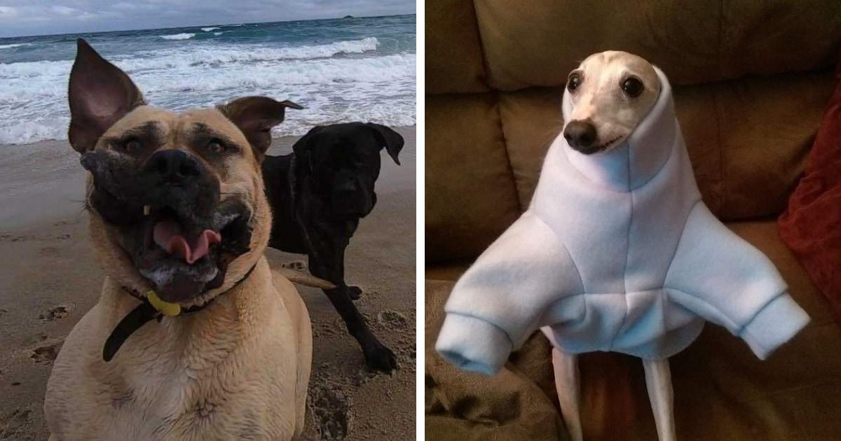 Пользователи сети делятся неудачными фото своих собак. И если бы питомцы о них знали, то попросили бы удалить