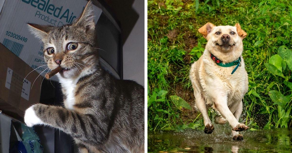 16 комичных фото, которые стали финалистами конкурса на самый смешной снимок домашних животных
