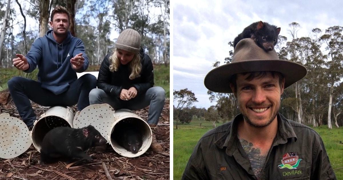 В Австралии впервые за 3000 лет появились тасманийские дьяволы. А выпускать их туда помогал Крис Хемсворт!