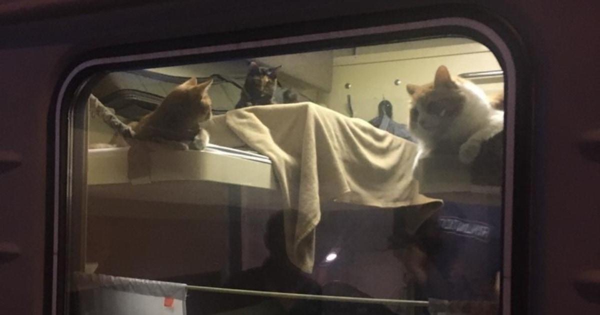 Пассажир поезда Москва-Анапа так любит своих котов, что выкупил для них всё купе, и это забота высшего уровня