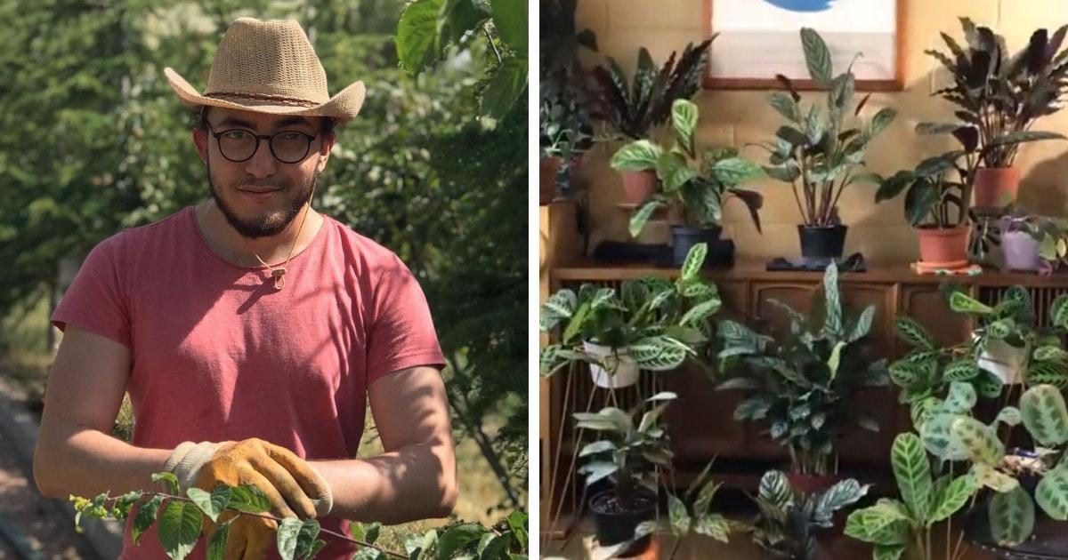 Парень решил посмотреть, чем весь день занимаются растения. Результат вышел жутковатый: они живые и шевелятся!