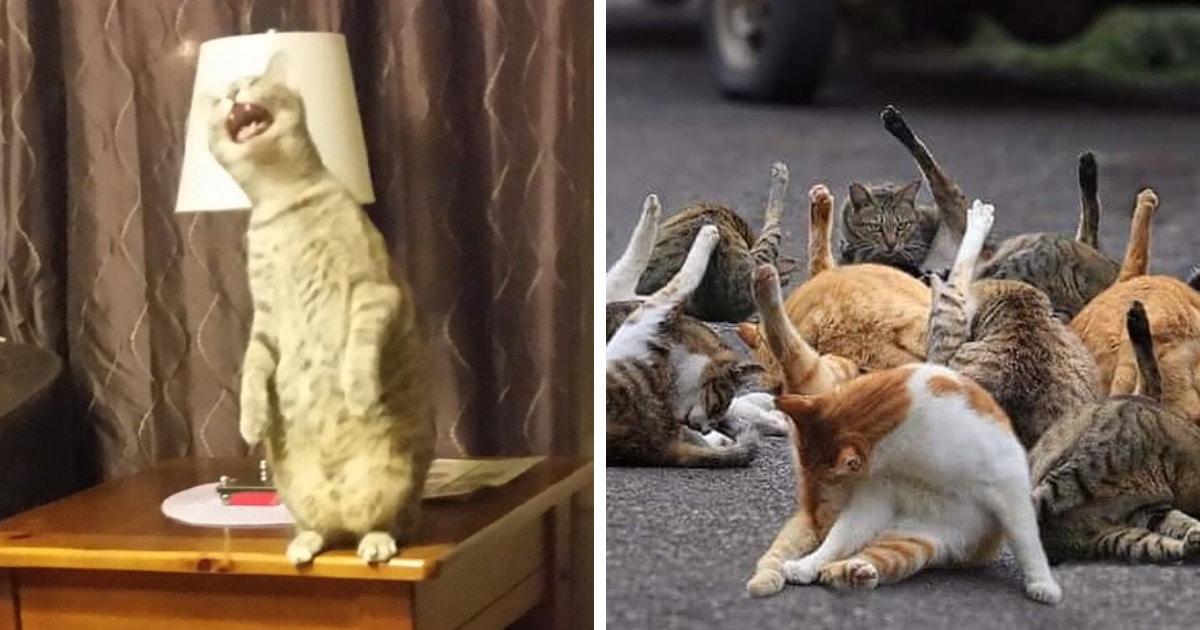 Пользователи сети устроили челлендж и показывают неудачные фото котов, за которые хвостатым было бы стыдно