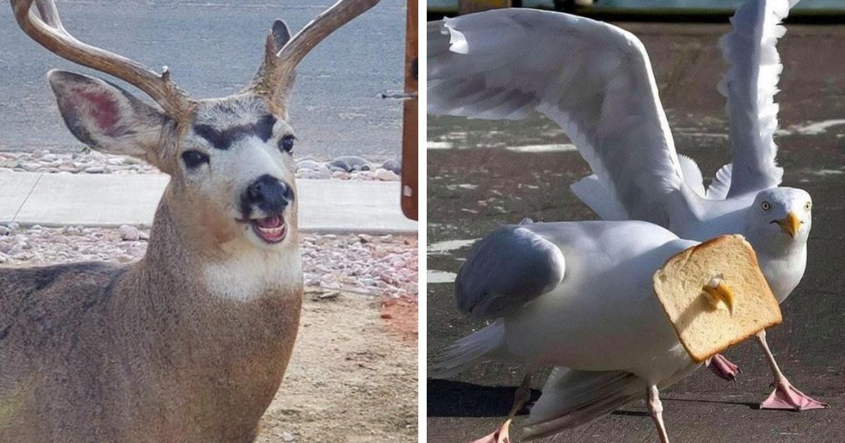 19 случаев, когда людям удалось сделать крайне удачные фото диких животных, ставшие комедийными шедеврами