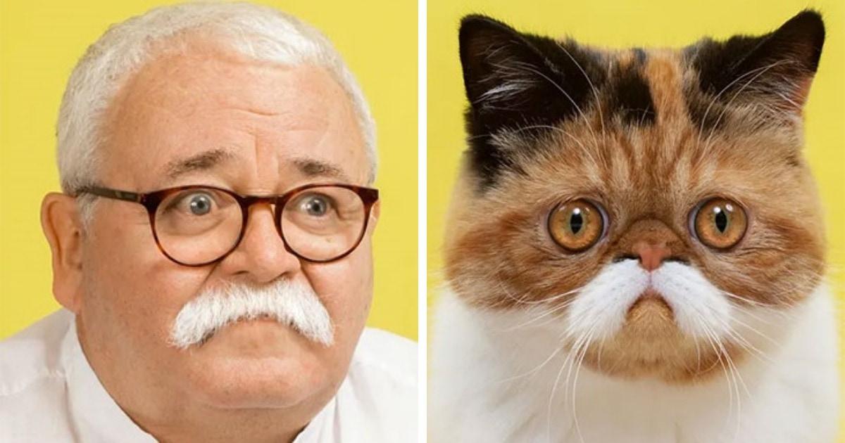 11 снимков лондонского фотографа о том, как сильно кошки похожи на людей