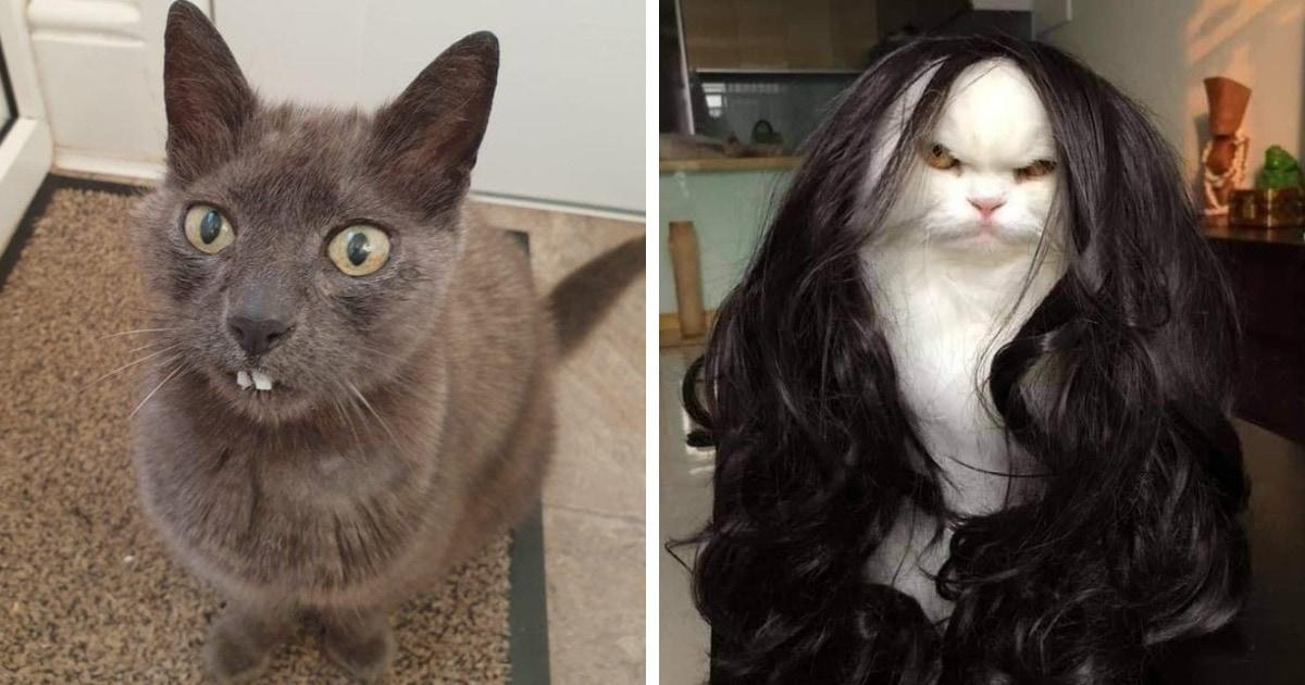 20 фотографий милых, смешных и дурашливых котов, которые легко поднимут настроение даже в самый угрюмый день