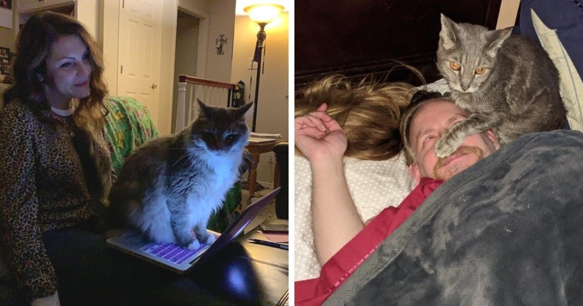 18 фотографий наглющих котов, которые плевали на личное пространство своих хозяев с высокой колокольни