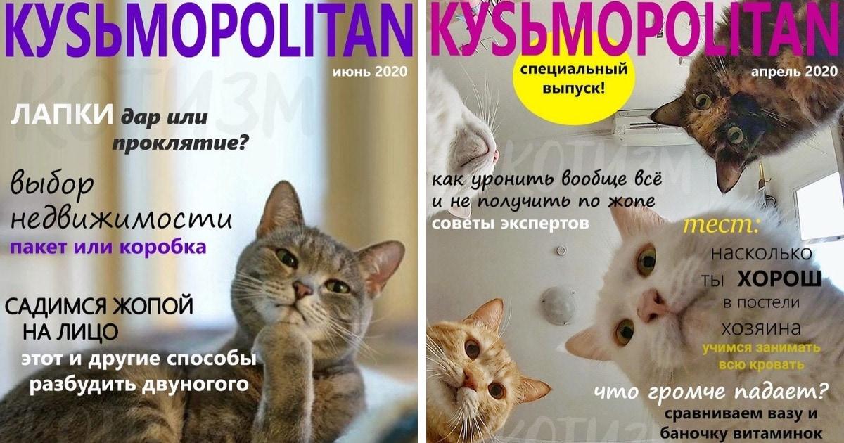 6 выпусков журнала КУSЬMOPOLITAN, который издаётся специально для котов. И ваш пушистый точно им зачитывается