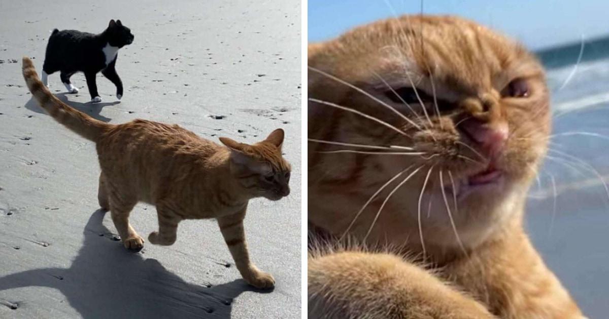 Рыжий кот попал на пляж, но оказался не готов к местному ветру. И на его морде отразились все вариации гнева