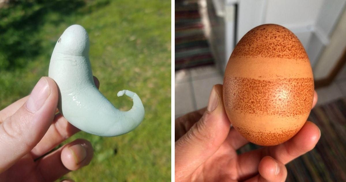 20 странных яиц необычных форм и цветов, которые способны удивить даже тех, кто их снёс