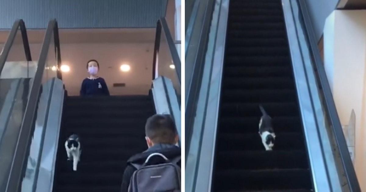 Котик пытается спустить вниз на эскалаторе, ведущем вверх, и смешнее напрасных стараний только его непонимание