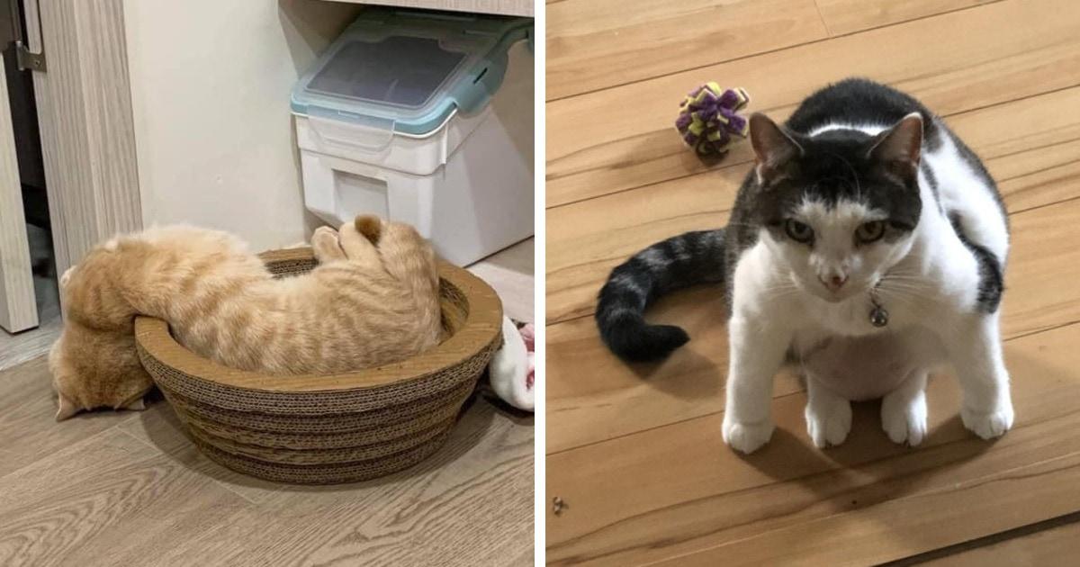 16 фотографий котов, которые «сломались» и доказали, что они непревзойдённые мастера самых упоротых поз