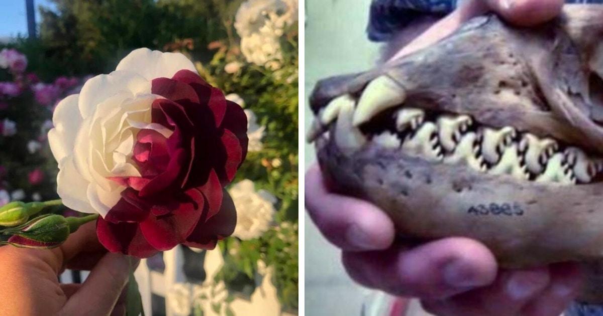 17 удивительных фотографий, которые доказывают, что природа умеет производить впечатление